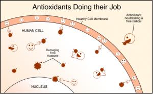آنتی اکسیدان چیست؟